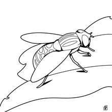 Dibujo mosca grande - Dibujos para Colorear y Pintar - Dibujos para colorear ANIMALES - Dibujos INSECTOS para colorear - Dibujos para pintar MOSCA