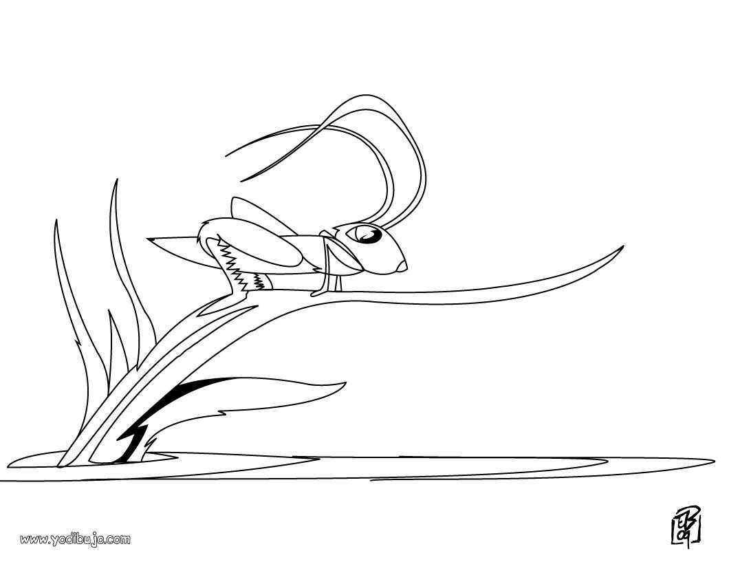 Dibujo para colorear : un saltamonte