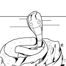 Dibujo cobra al ataque - Dibujos para Colorear y Pintar - Dibujos para colorear ANIMALES - Dibujos REPTILES para colorear - Colorear dibujos SERPIENTE - Colorear COBRA
