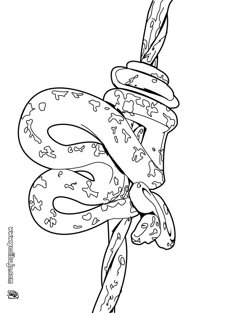 Worksheet. Dibujos para colorear serpiente pitn  eshellokidscom