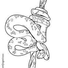 Dibujo serpiente pitón - Dibujos para Colorear y Pintar - Dibujos para colorear ANIMALES - Dibujos REPTILES para colorear - Colorear dibujos SERPIENTE - Dibujos para colorear e imprimir SERPIENTE