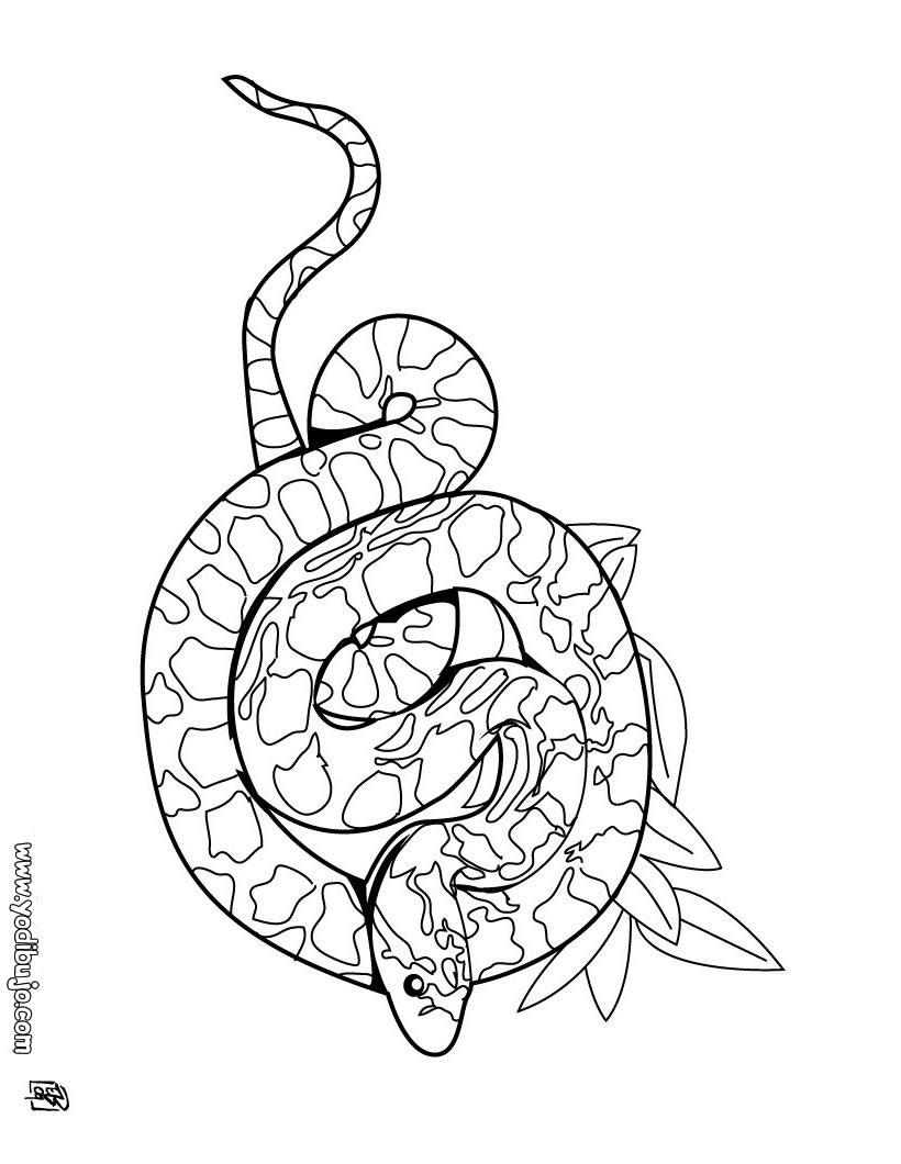 Dibujos para colorear serpiente sibon - es.hellokids.com