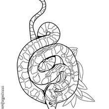 Dibujo serpiente Sibon - Dibujos para Colorear y Pintar - Dibujos para colorear ANIMALES - Dibujos REPTILES para colorear - Colorear dibujos SERPIENTE - Dibujos para colorear e imprimir SERPIENTE