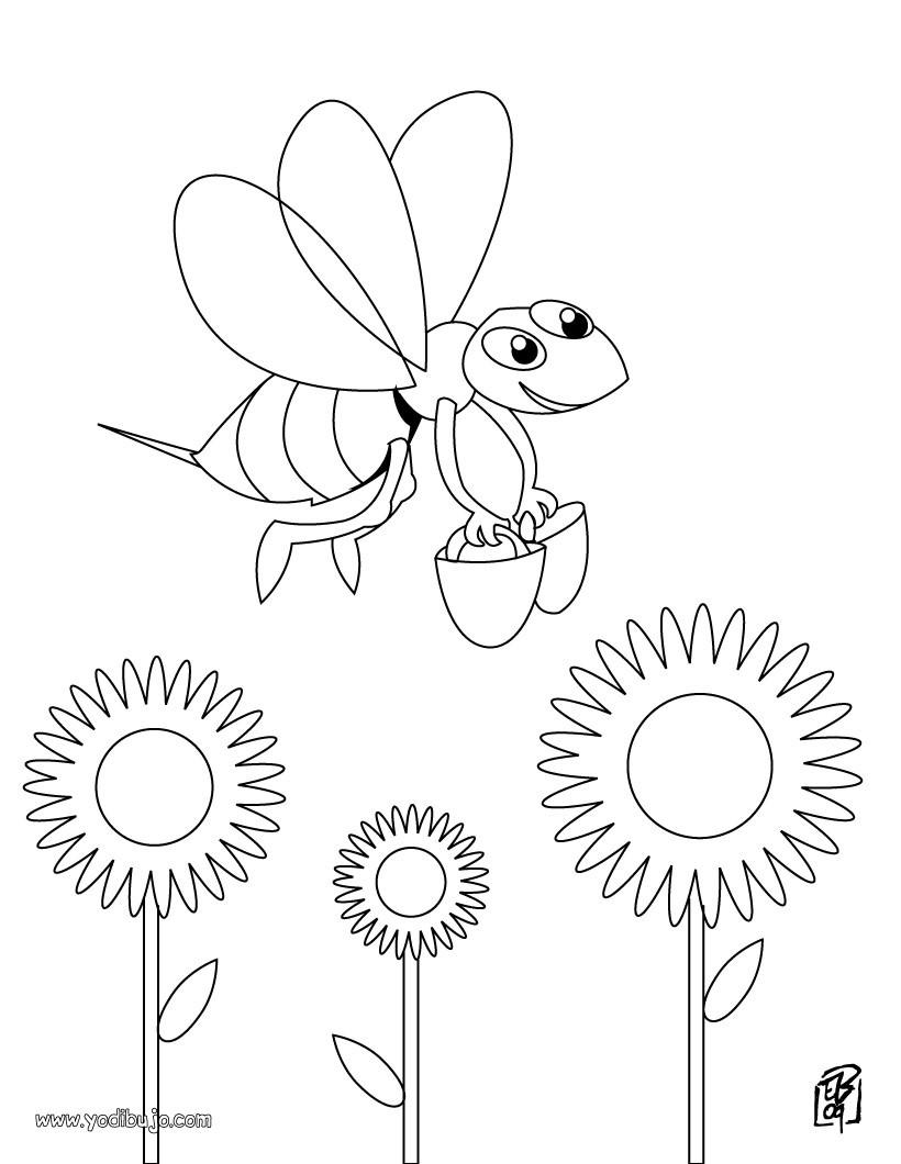 Dibujos INSECTOS para colorear - 25 dibujos de animales para ...