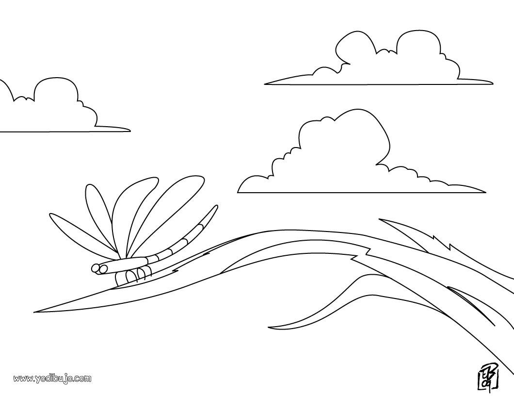 Dibujos INSECTOS para colorear, una libélula para imprimir