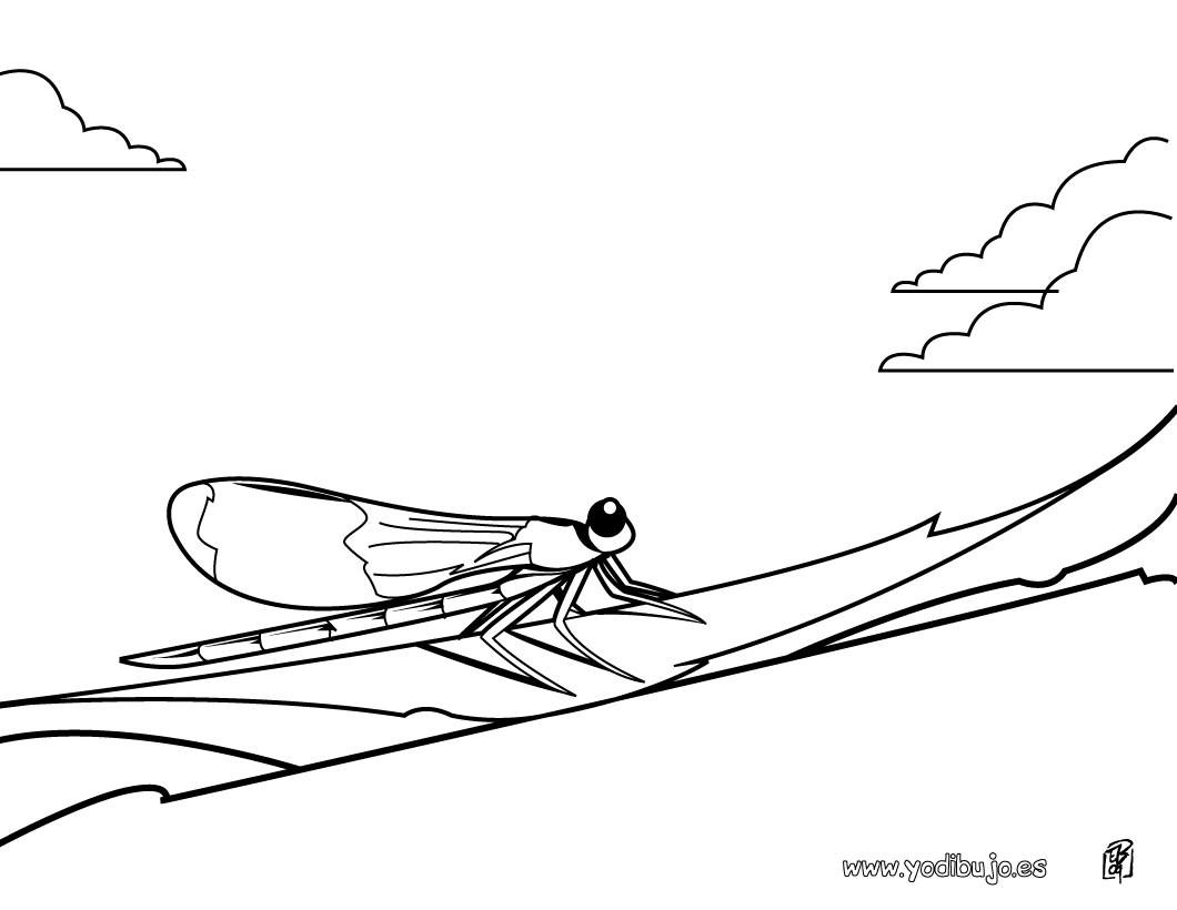 Dibujos INSECTOS para colorear, libélula para imprimir