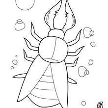 Dibujo tijereta - Dibujos para Colorear y Pintar - Dibujos para colorear ANIMALES - Dibujos INSECTOS para colorear - Insectos para colorear GRATIS