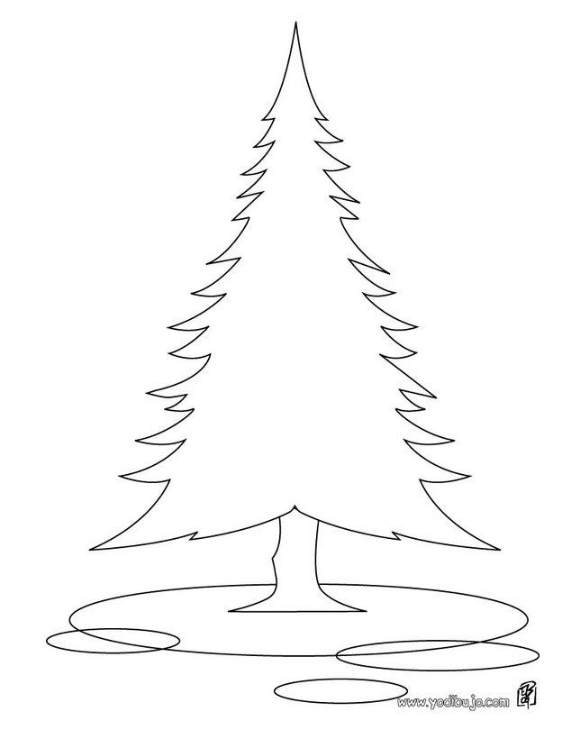Dibujos para colorear un abeto - es.hellokids.com