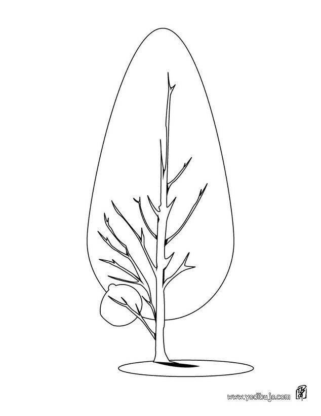 Dibujo para colorear : un pino