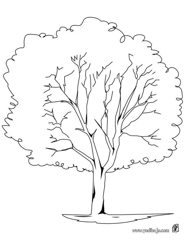 Dibujo de un árbol plátano - Árboles para colorear