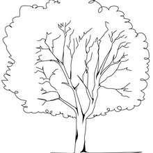 Dibujo de un árbol plátano - Dibujos para Colorear y Pintar - LA NATURALEZA: dibujos para colorear - Árboles para colorear