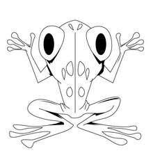 Dibujo la rana - Dibujos para Colorear y Pintar - Dibujos para colorear ANIMALES - Dibujos REPTILES para colorear - Colorear dibujos RANA