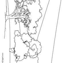Dibujo de varios robles - Dibujos para Colorear y Pintar - LA NATURALEZA: dibujos para colorear - Árboles para colorear