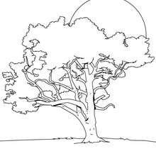 Dibujo de un tilo - Dibujos para Colorear y Pintar - LA NATURALEZA: dibujos para colorear - Árboles para colorear