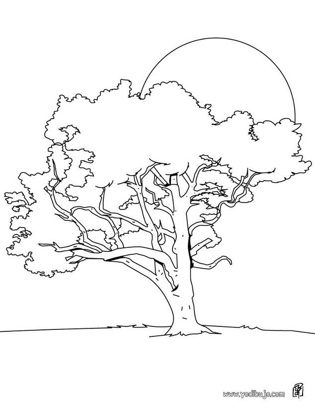 un lamo dibujo de un tilo dibujos para colorear y pintar la naturaleza dibujos para