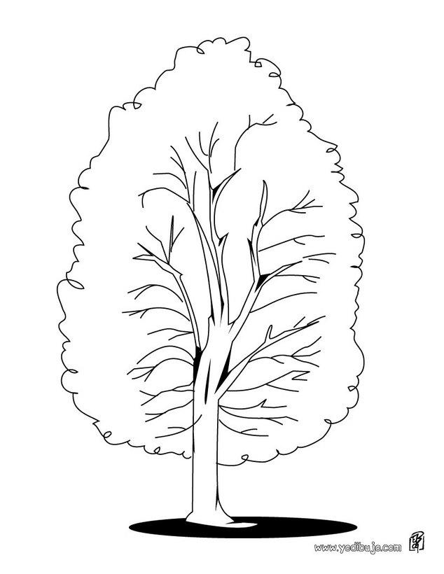 Dibujos para colorear un árbol castaño - es.hellokids.com