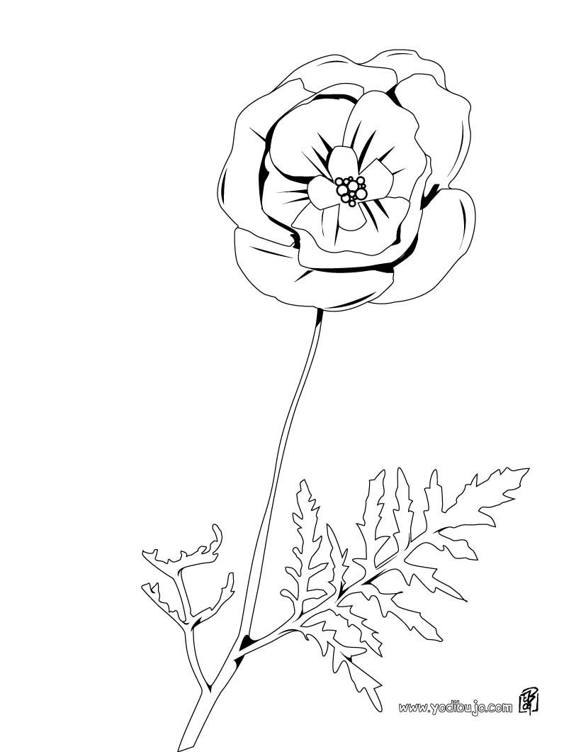 Dibujo de una amapola - Dibujos de FLORES para pintar