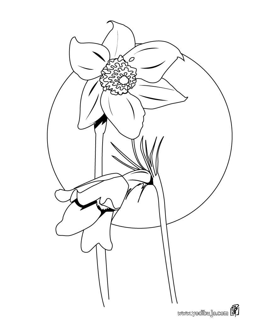 Dibujos para colorear una rosa  eshellokidscom