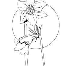 Dibujo de una anemona - Dibujos para Colorear y Pintar - LA NATURALEZA: dibujos para colorear - Dibujos de FLORES para pintar