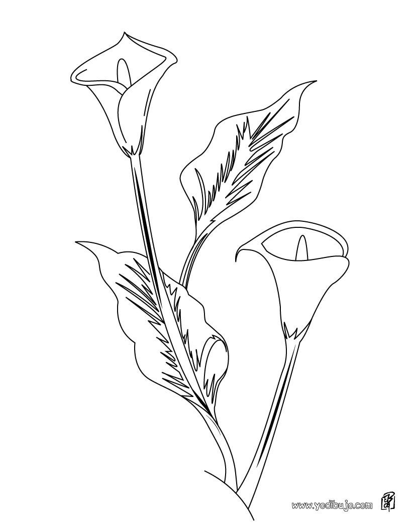 Dibujo de un aro blanco - Dibujos de FLORES para pintar
