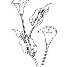 Dibujo de un aro blanco - Dibujos para Colorear y Pintar - LA NATURALEZA: dibujos para colorear - Dibujos de FLORES para pintar