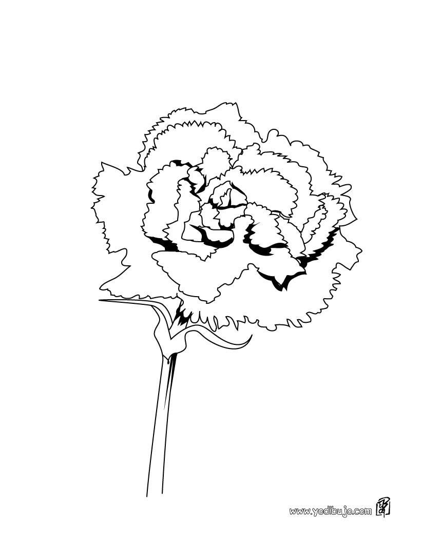Dibujo de un clavel - Dibujos de FLORES para pintar