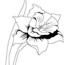Dibujo de un junquillo - Dibujos para Colorear y Pintar - LA NATURALEZA: dibujos para colorear - Dibujos de FLORES para pintar