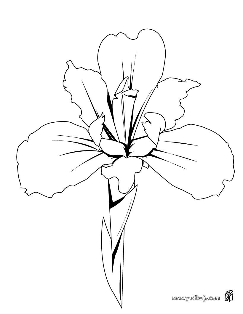 Dibujo de un lirio - Dibujos de FLORES para pintar