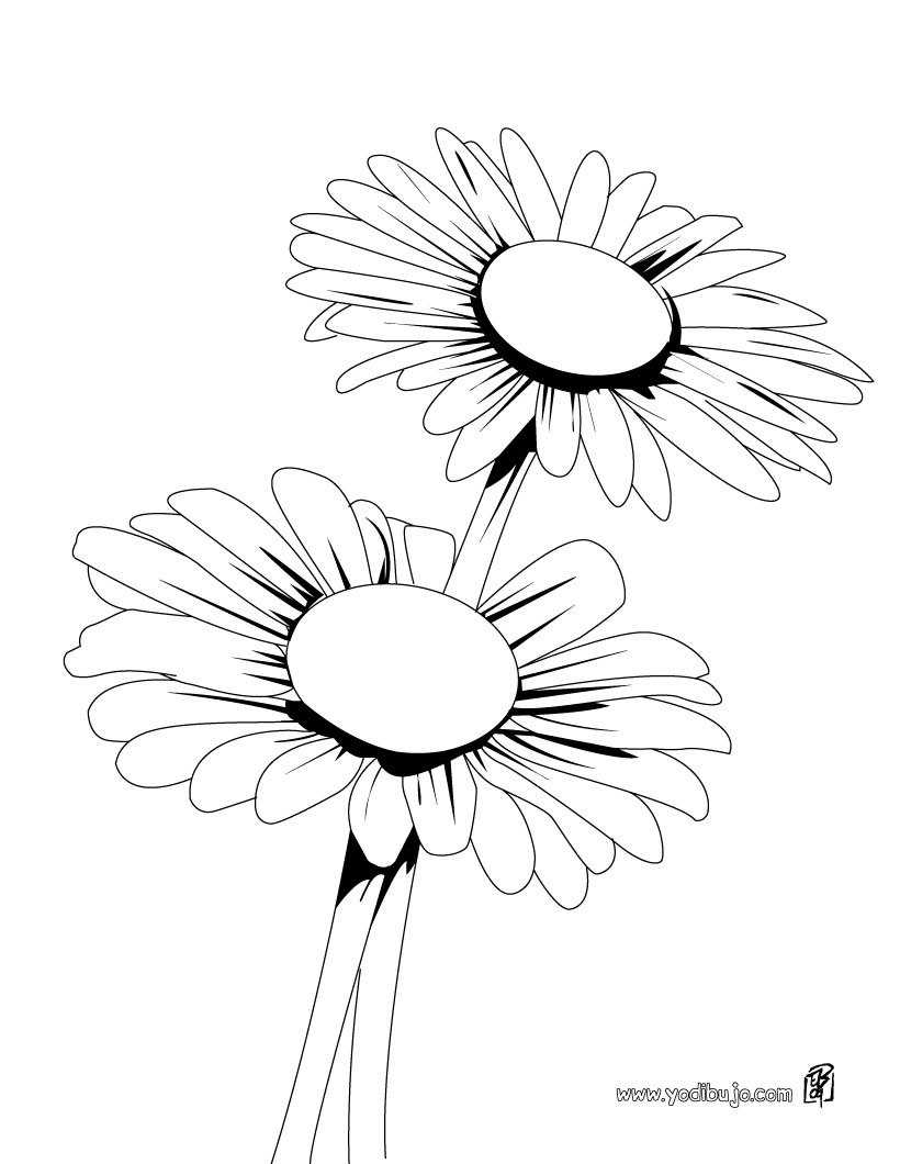 Dibujo de margaritas - Dibujos de FLORES para pintar