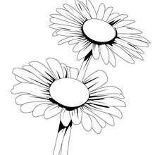 Dibujo de margaritas - Dibujos para Colorear y Pintar - LA NATURALEZA: dibujos para colorear - Dibujos de FLORES para pintar