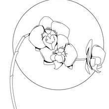 Dibujo de una orquidea - Dibujos para Colorear y Pintar - LA NATURALEZA: dibujos para colorear - Dibujos de FLORES para pintar