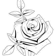Dibujo de una rosa - Dibujos para Colorear y Pintar - LA NATURALEZA: dibujos para colorear - Dibujos de FLORES para pintar