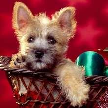 Fondo de Navidad PERRO - Dibujar Dibujos - Dibujos para DESCARGAR - FONDOS GRATIS - Fondos NAVIDAD - Fondos de pantalla ANIMALES NAVIDEÑOS - Fondos de pantalla PERROS