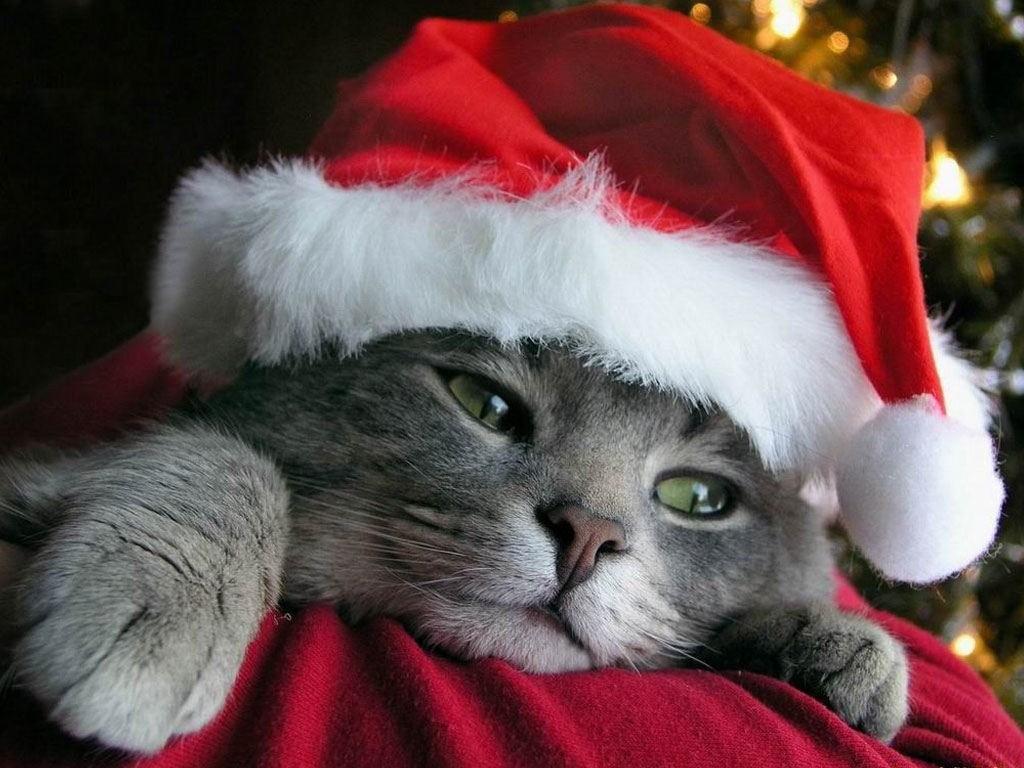 fondo-pantalla-gato-navidad