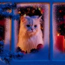 Fondo de Navidad GATO BLANCO - Dibujar Dibujos - Dibujos para DESCARGAR - FONDOS GRATIS - Fondos NAVIDAD - Fondos de pantalla ANIMALES NAVIDEÑOS - Fondos de pantalla GATOS