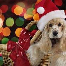 Fondo de Navidad PERRO BEIGE - Dibujar Dibujos - Dibujos para DESCARGAR - FONDOS GRATIS - Fondos NAVIDAD - Fondos de pantalla ANIMALES NAVIDEÑOS - Fondos de pantalla PERROS