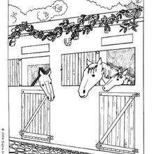 Dibujo de caballos en su box - Dibujos para Colorear y Pintar - Dibujos para colorear DEPORTES - Dibujos de EQUITACION para colorear - Dibujos para pintar CENTRO ECUESTRE