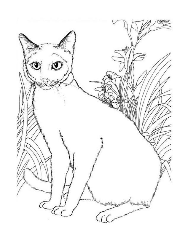 Dibujos para colorear gatos siameses - es.hellokids.com