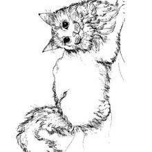 Colorear GATO ANGORA - Dibujos para Colorear y Pintar - Dibujos para colorear ANIMALES - Dibujos GATOS para colorear - Dibujos para colorear GATOS ANGORA