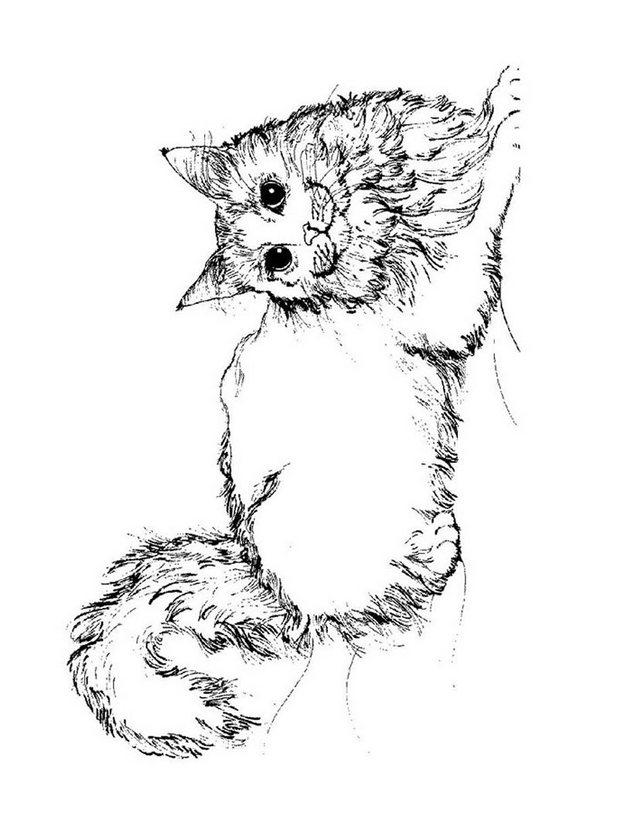 Dibujos para colorear gato angora - es.hellokids.com