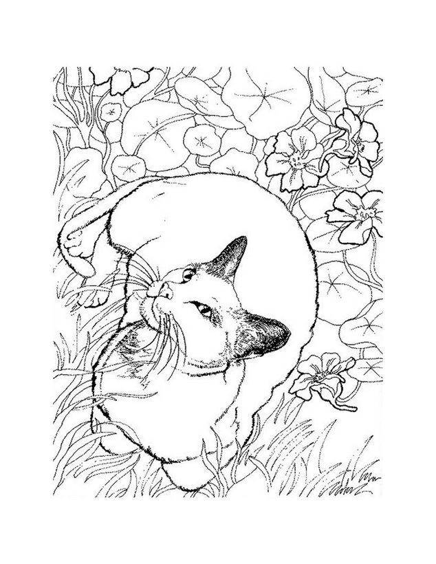 Dibujos para colorear gato siames - es.hellokids.com