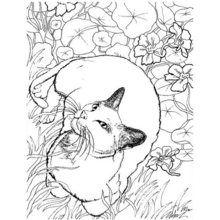 Pintar GATO SIAMES - Dibujos para Colorear y Pintar - Dibujos para colorear ANIMALES - Dibujos GATOS para colorear - Dibujos para pintar GATOS SIAMESES