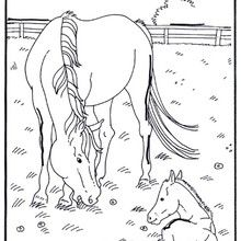 Colorear un potro recien nacido - Dibujos para Colorear y Pintar - Dibujos para colorear ANIMALES - Colorear CABALLOS - Dibujos de POTROS Y CABALLOS para colorear