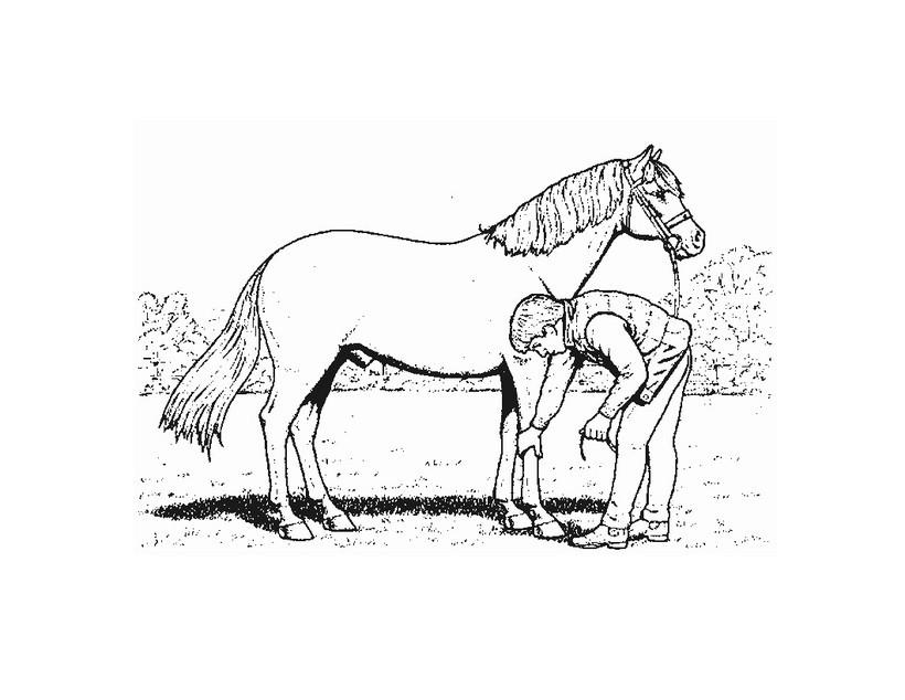 Dibujo para colorear : cuidar un caballo