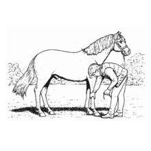 Colorear cuidar un caballo - Dibujos para Colorear y Pintar - Dibujos para colorear DEPORTES - Dibujos de EQUITACION para colorear - Dibujos para pintar CENTRO ECUESTRE