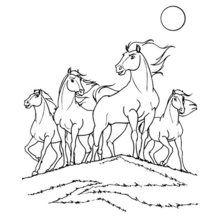 Colorear Spirit el caballo Mustang - Dibujos para Colorear y Pintar - Dibujos para colorear ANIMALES - Colorear CABALLOS - Colorear CABALLOS MUSTANG