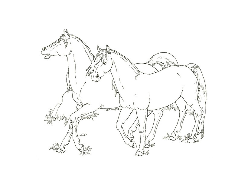 Colorear CABALLOS - 51 dibujos de animales para colorear y pintar en ...
