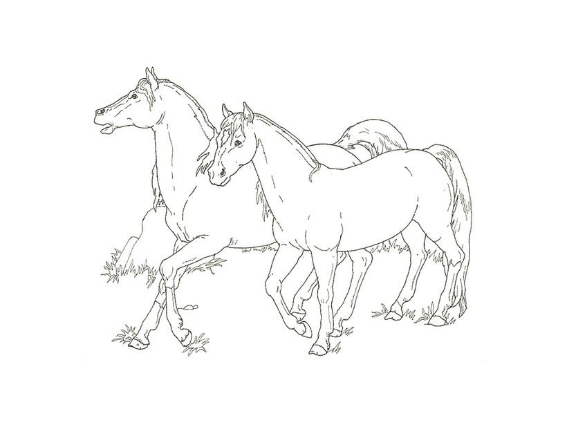 Dibujos para colorear potro - es.hellokids.com