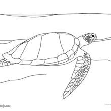 Dibujo para colorear : Tortuga Golfina