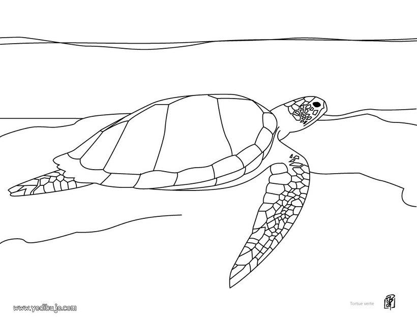 Dibujos para colorear tortuga golfina - es.hellokids.com